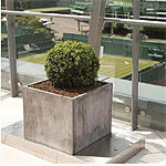 Old-World Italy in IOTA's Venice Concrete Planters